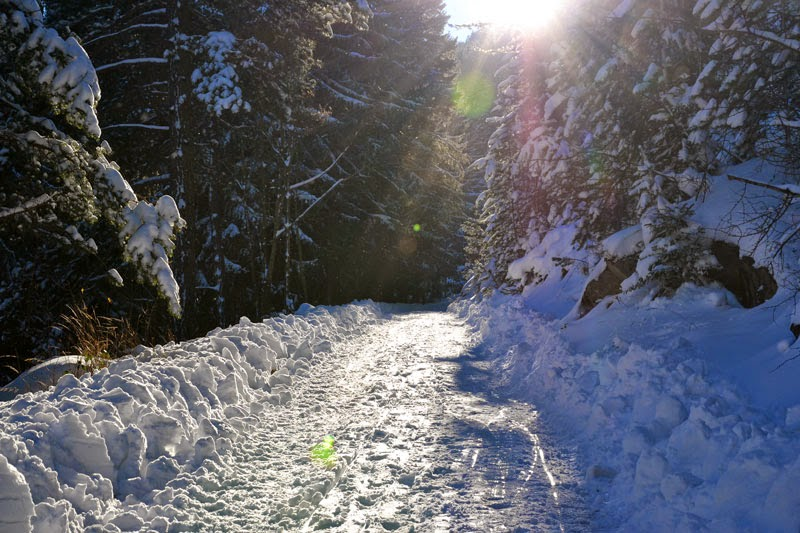 A mountain trail to the Schneeberg, the Alps in Lower Austria