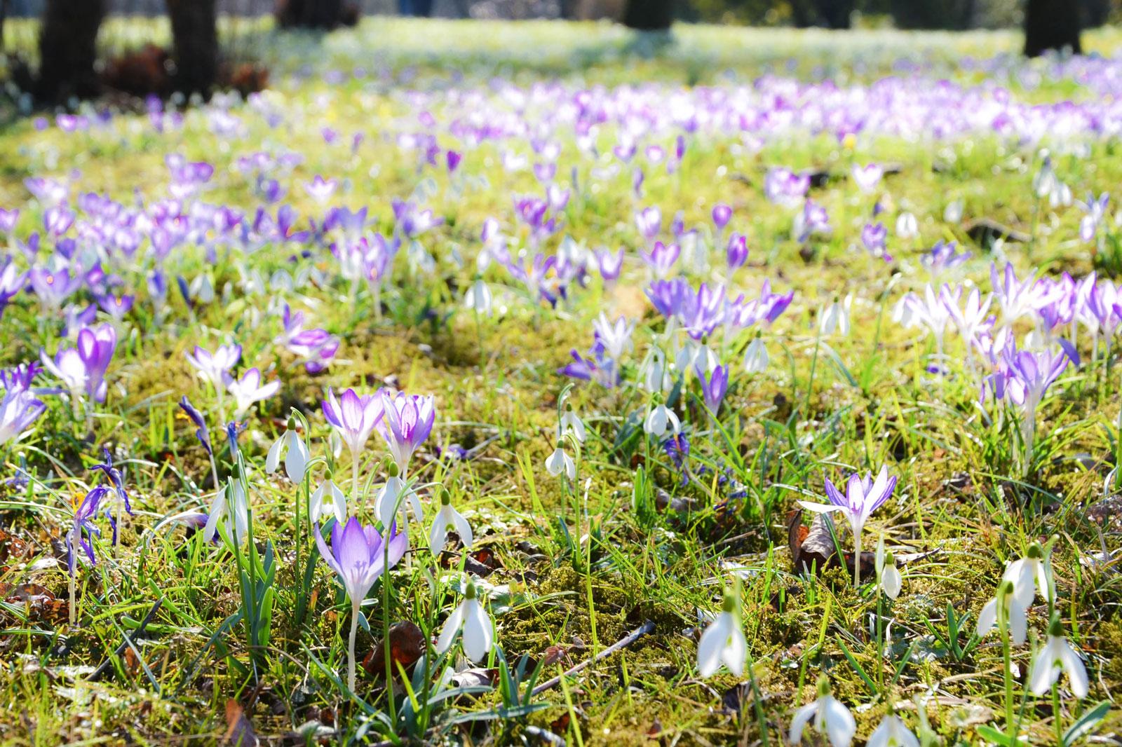 belvedere-spring-vienna-10