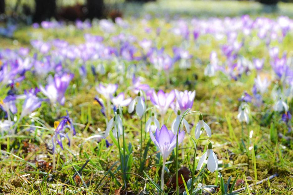 Botanischer Garten der Universität Wien