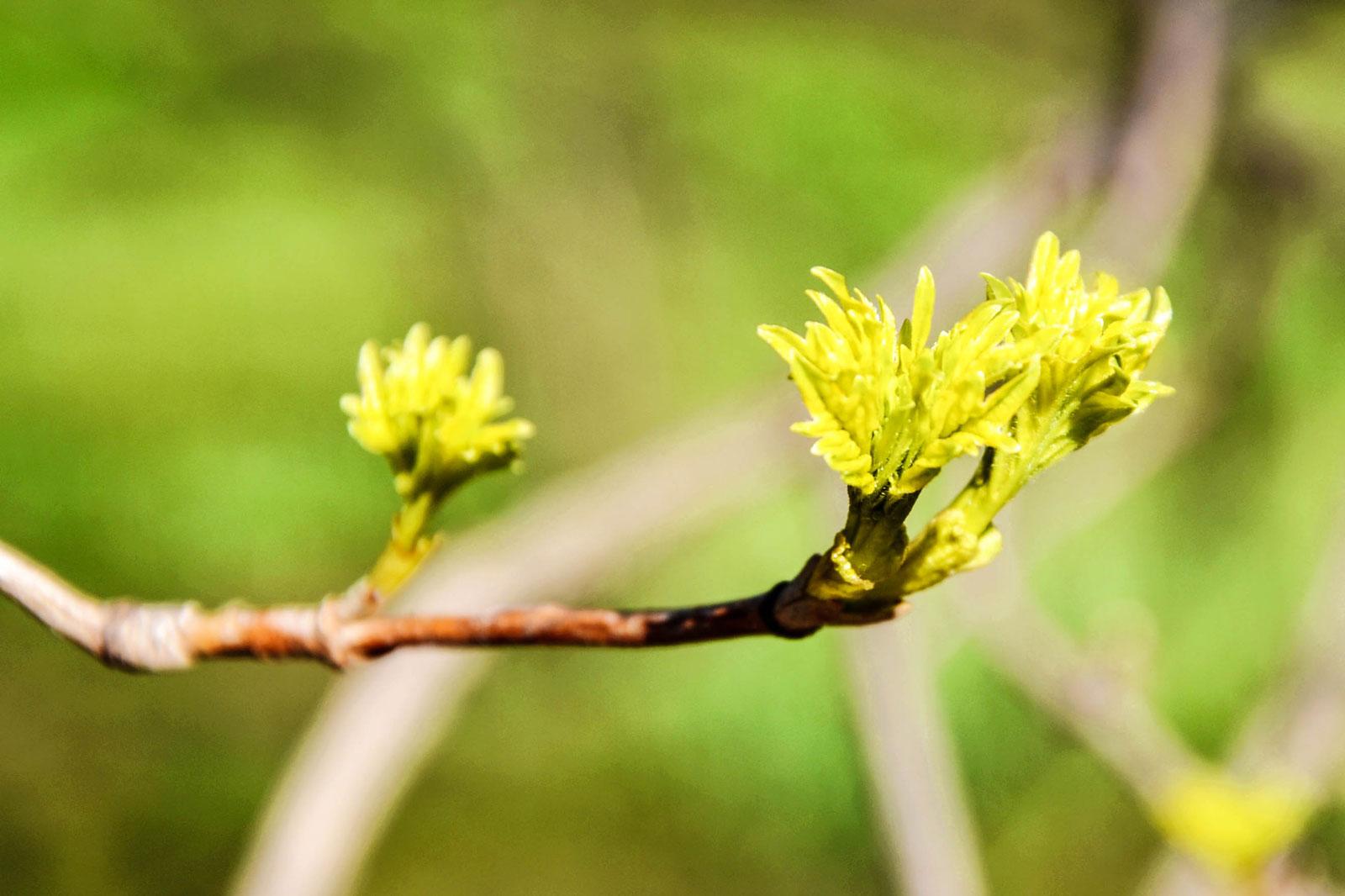 belvedere-spring-vienna-19