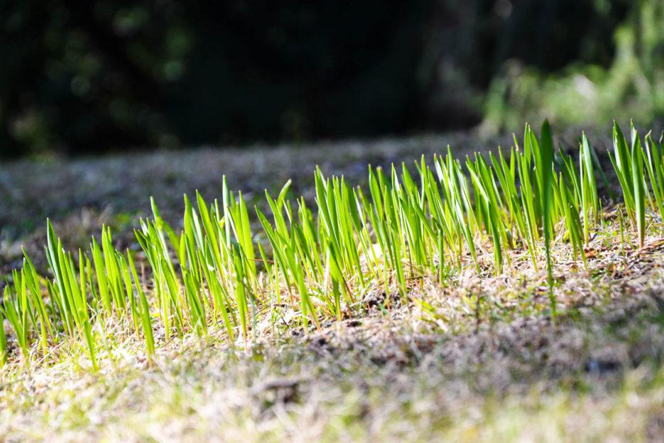 Spring in Botanischer Garten der Universität Wien