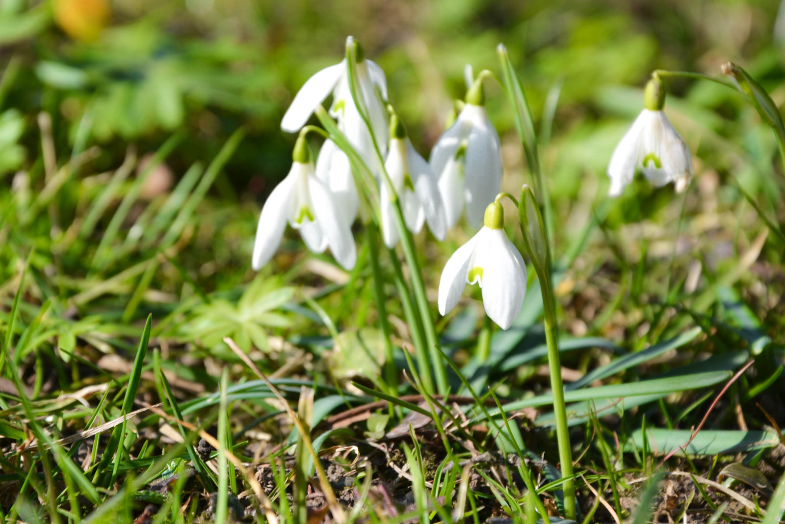 belvedere-spring-vienna-7