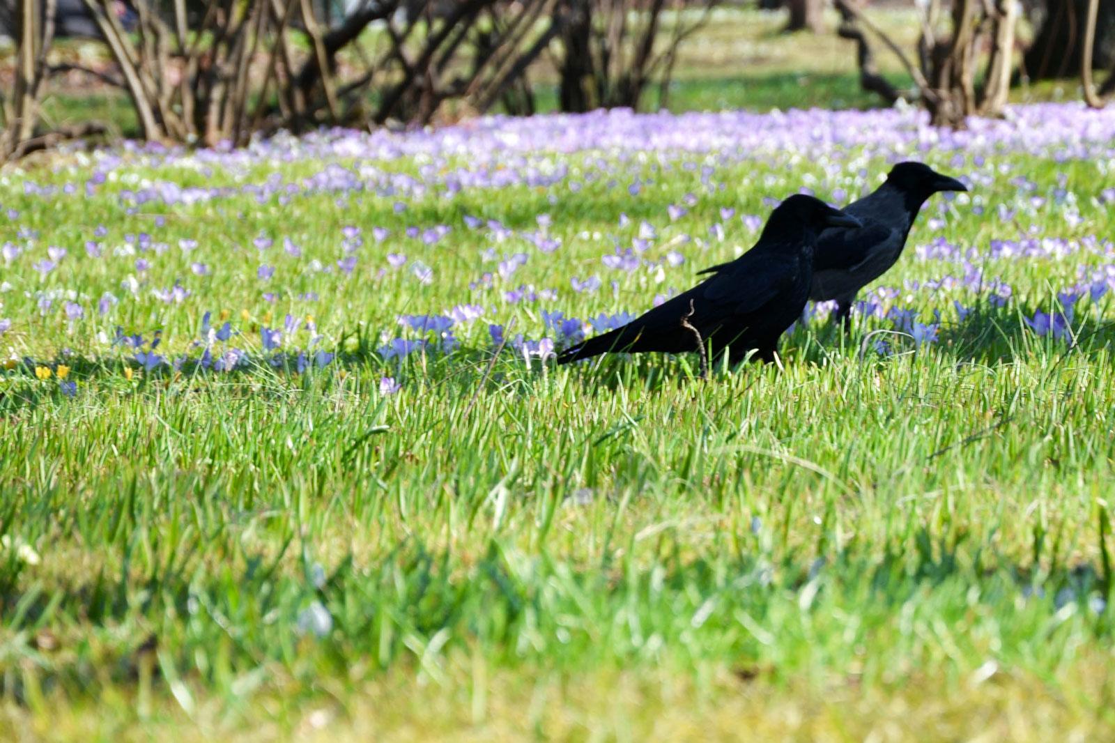 belvedere-spring-vienna-8