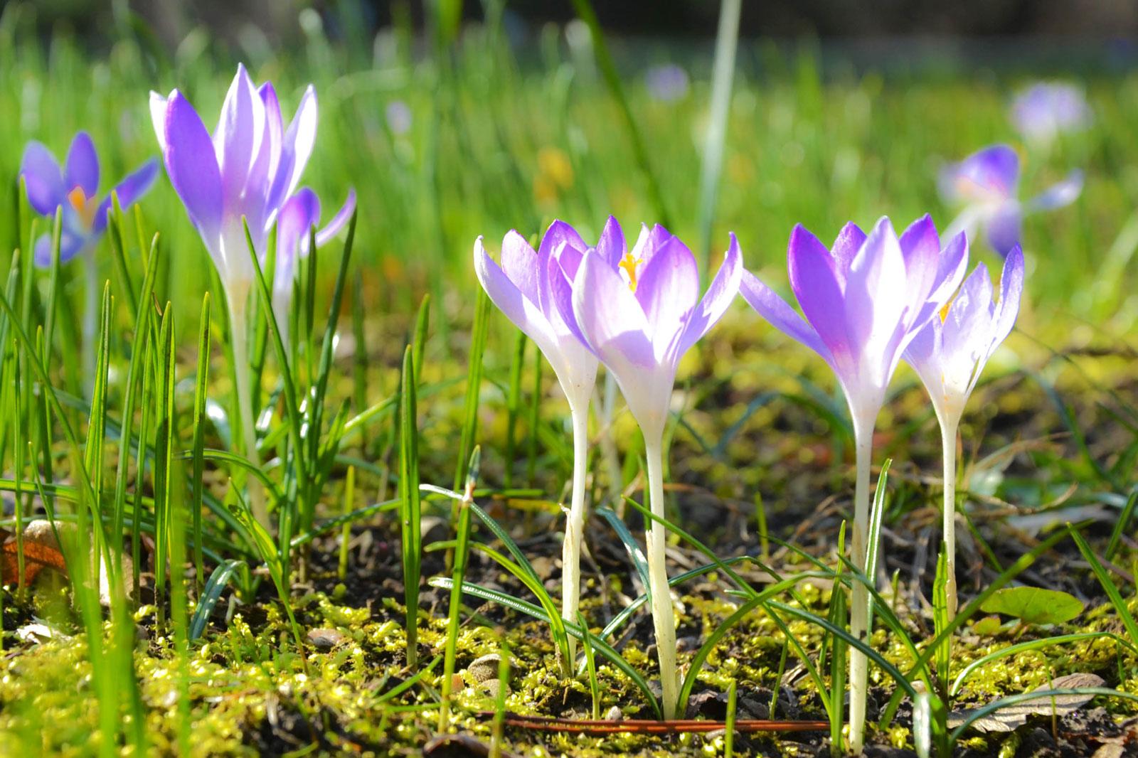 belvedere-spring-vienna-safran
