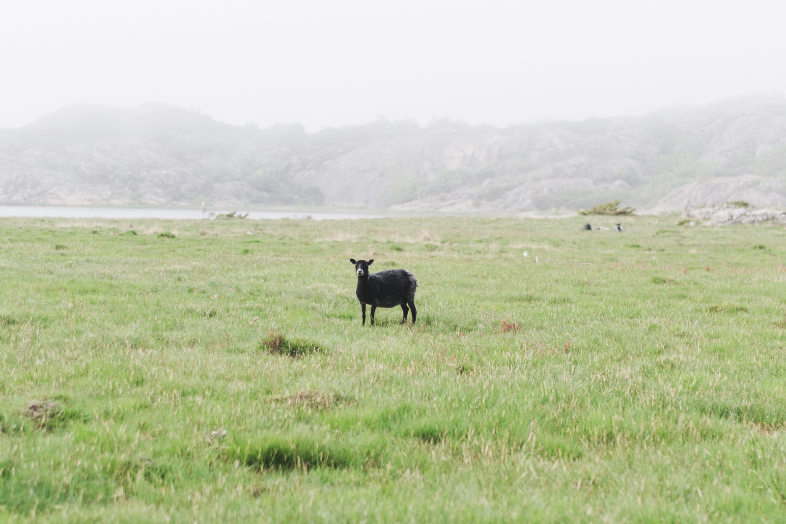 Pasture-on-Galtero-Island