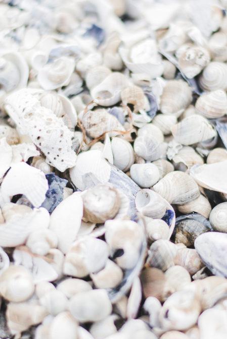 Seashells-Galtero