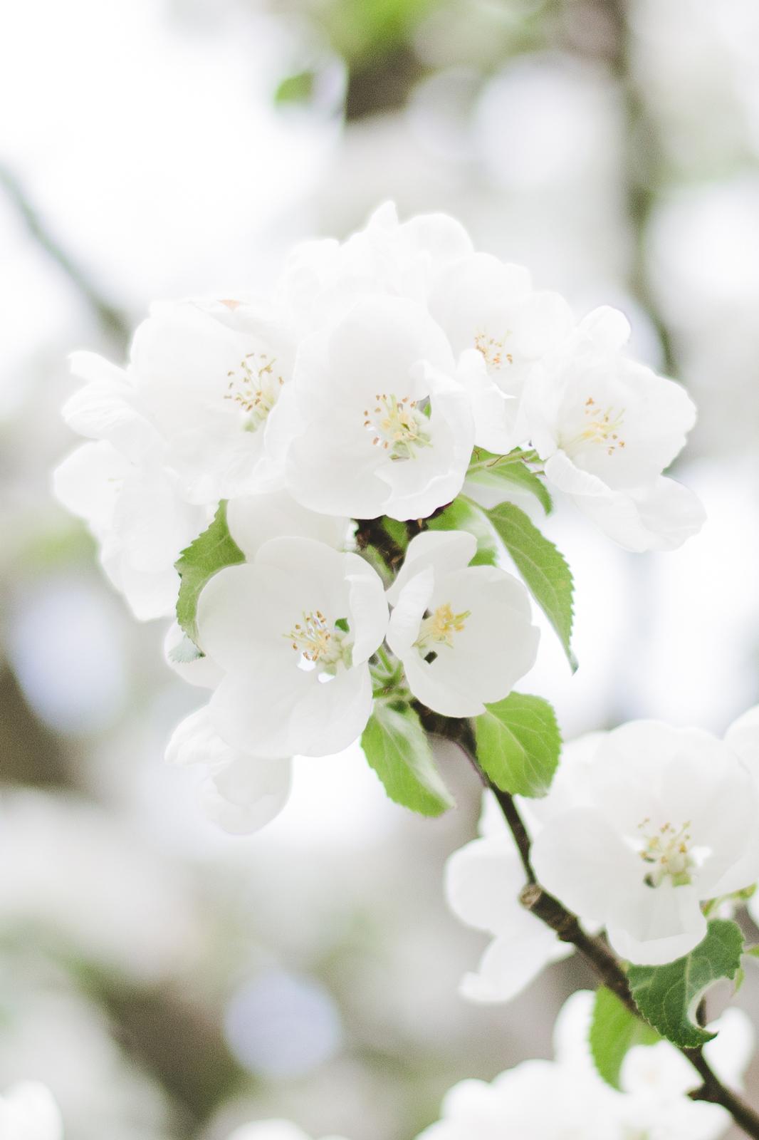 Spring-in-Branno2
