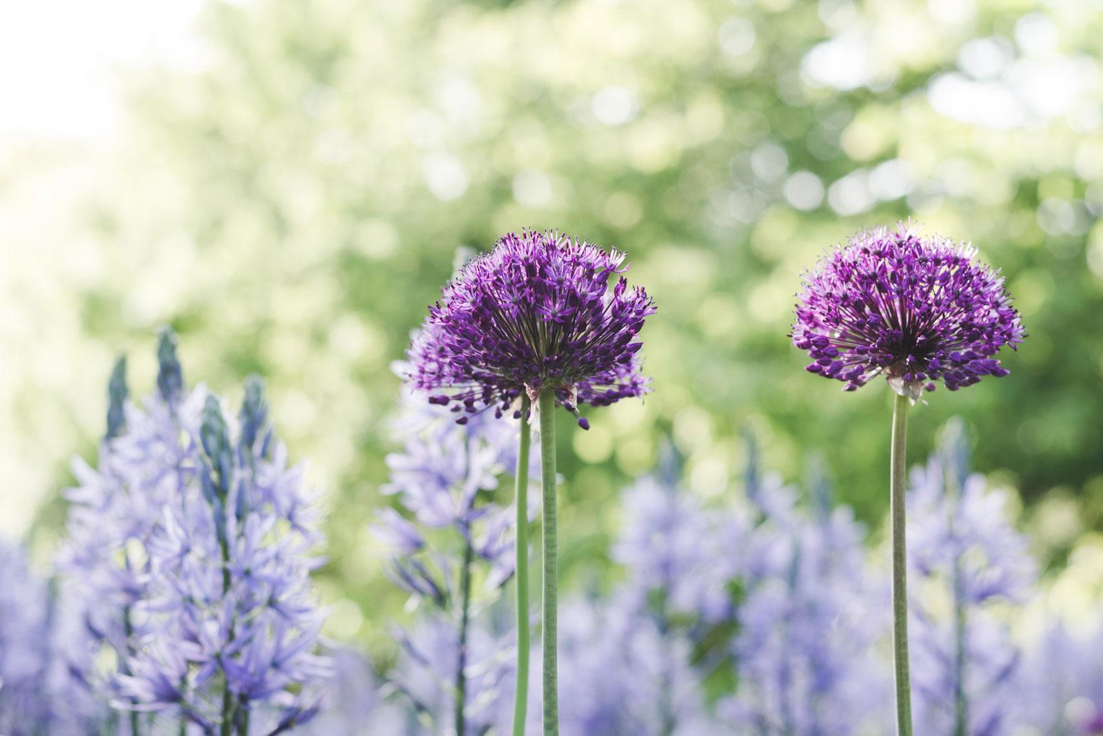 Flowers-Gbg-Botaniska