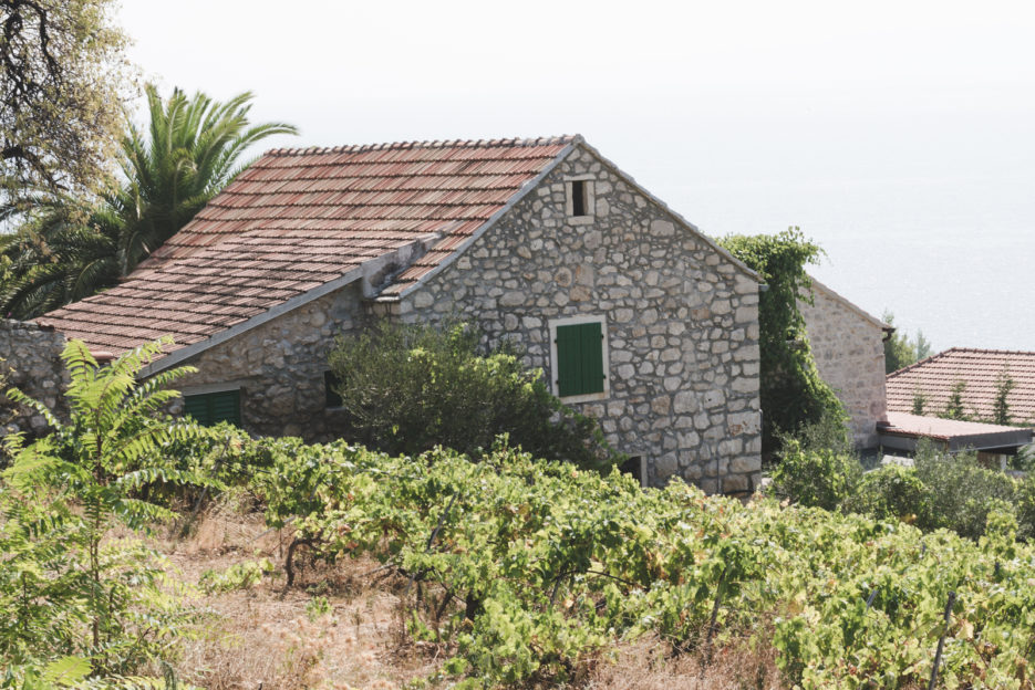 Vineyard in Zavala, our honeymoon trip to Hvar, Croatia - from travel blog https://epepa.eu/