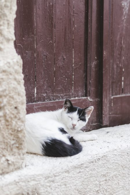 A cat in Rhodes Old Town, Greece - from travel blog https://epepa.eu/