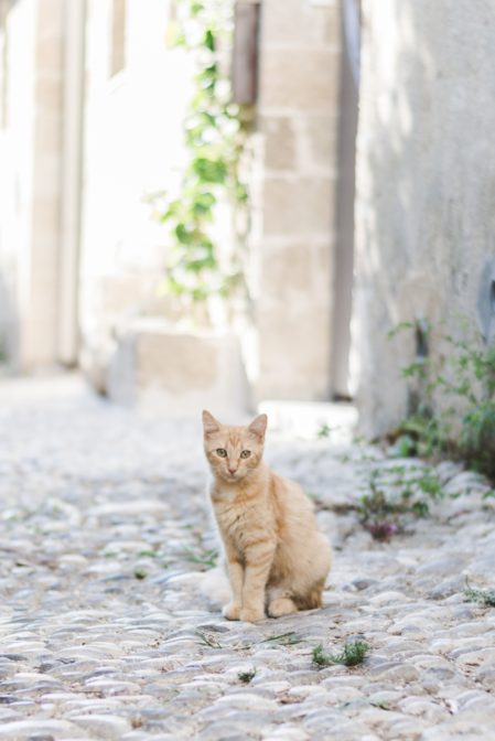 Rhodes, the island of cats - from travel blog https://epepa.eu/