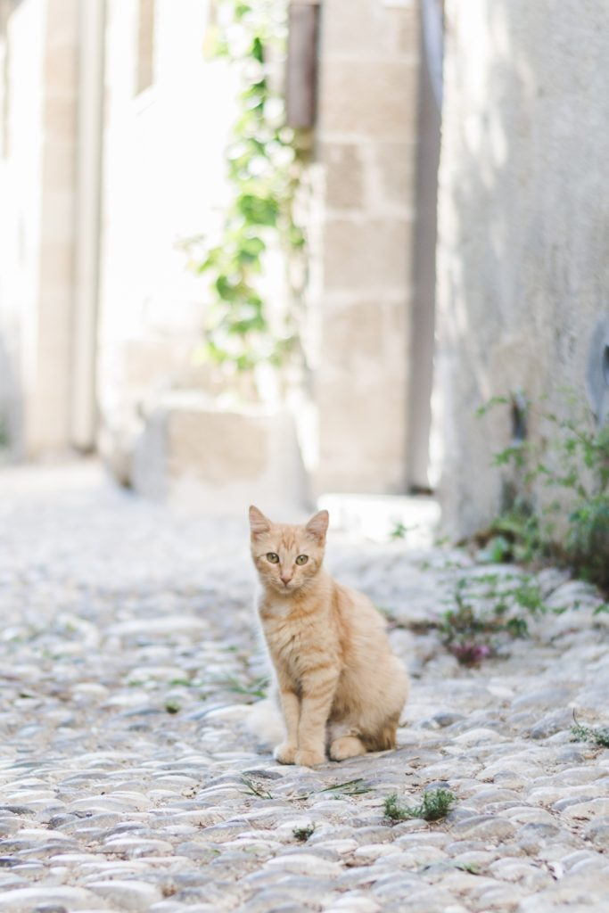 Rhodes, the island of cats - from travel blog http://Epepa.eu