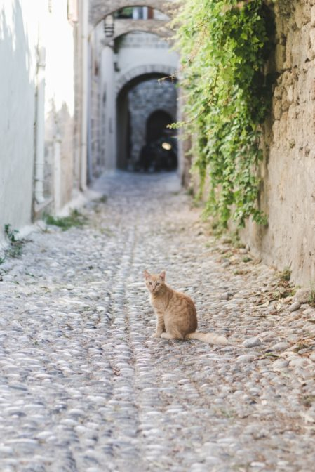 Red cat in the Medieval City, Rhodes, Greece - from travel blog https://epepa.eu/