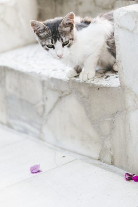 Cat in the Medieval Town of Rhodes, Greece - from travel blog https://epepa.eu/