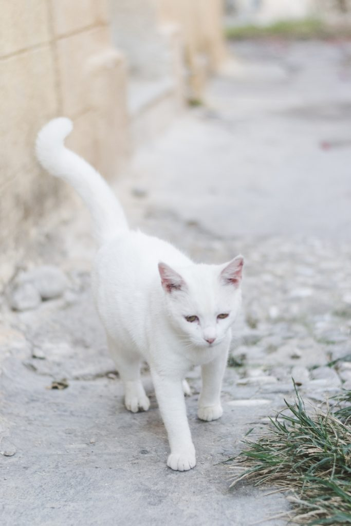Rhodes, Greece - the island of cats - from travel blog http://Epepa.eu