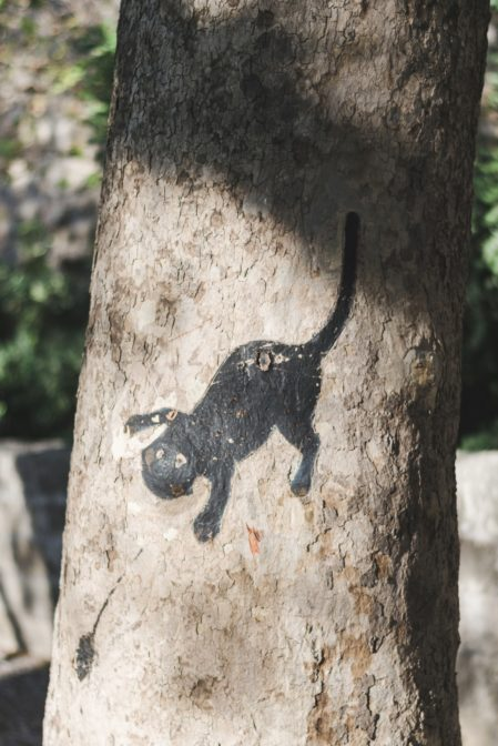 Cat painting on the tree, Rhodes, Greece - from travel blog https://epepa.eu/