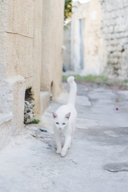 White cat in Rhodes Old Town, Greece - from travel blog https://epepa.eu/