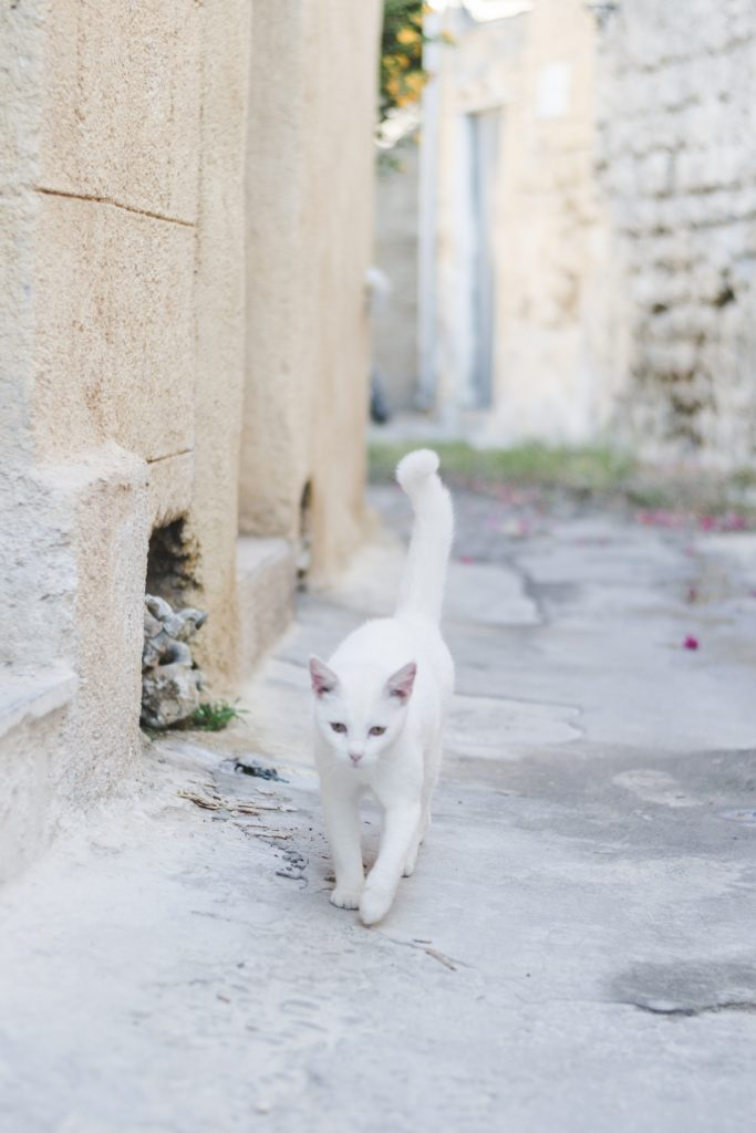 White cat in Rhodes Old Town, Greece - from travel blog http://Epepa.eu