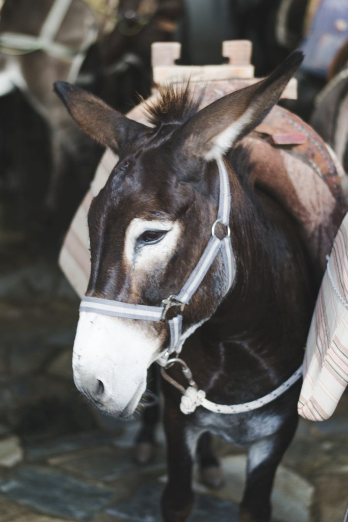 A donkey in Lindos, Rhodes Island, Greece - from travel blog: http://Epepa.eu