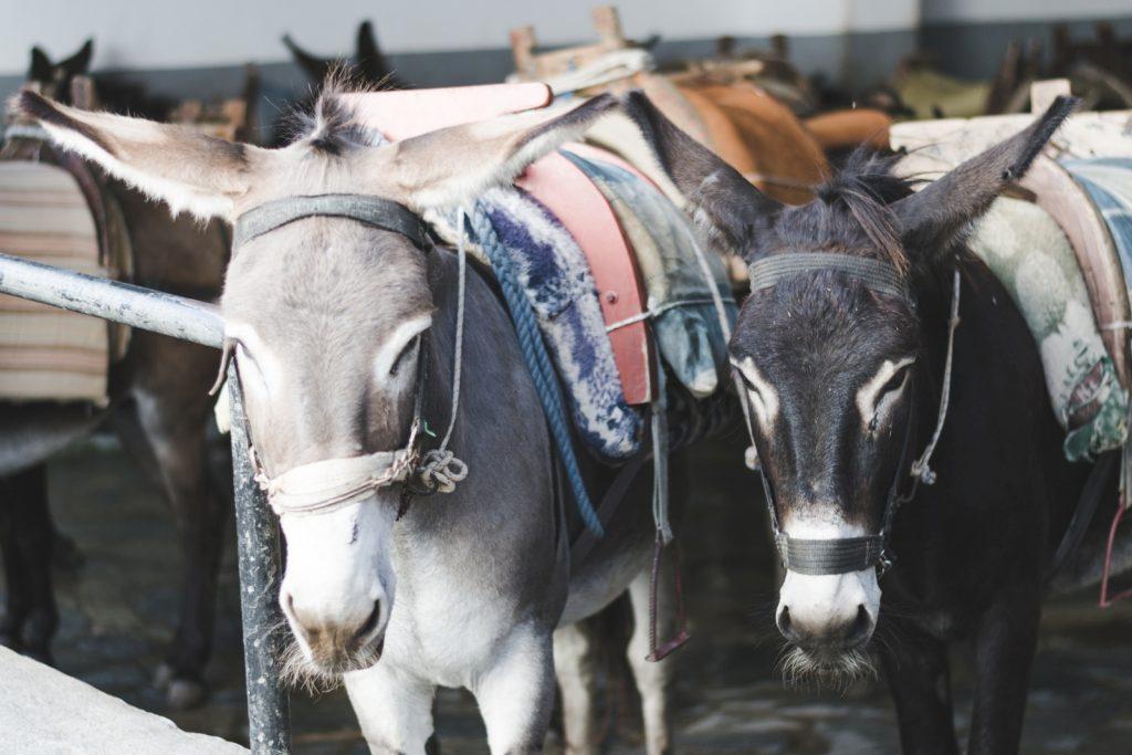 Donkeys in Lindos, Rhodes Island, Greece - from travel blog: http://Epepa.eu