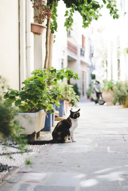 Rhodes, the island of cats - from travel blog: https://epepa.eu/
