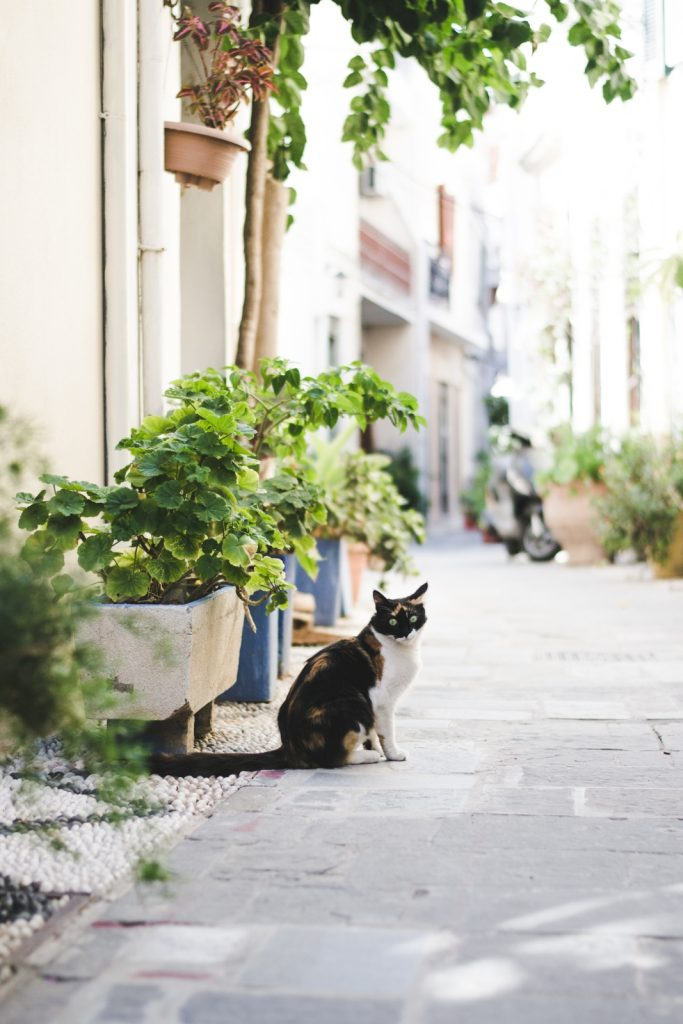Rhodes, the island of cats - from travel blog: http://Epepa.eu