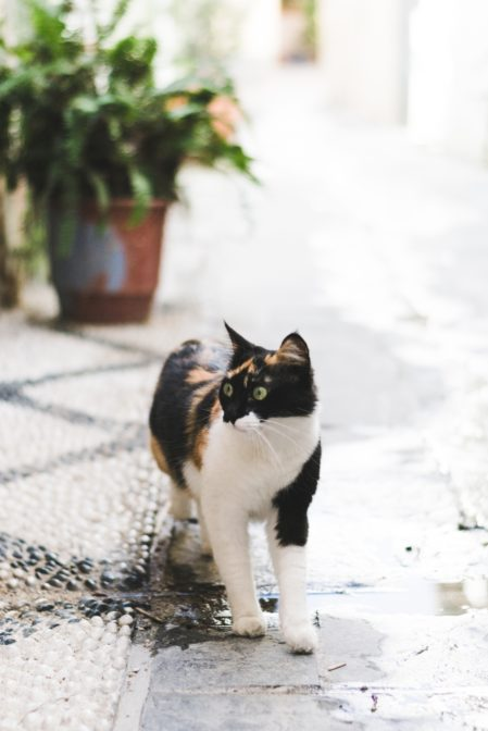 Funny cat in Rhodes Town, Greece - from travel blog: https://epepa.eu/