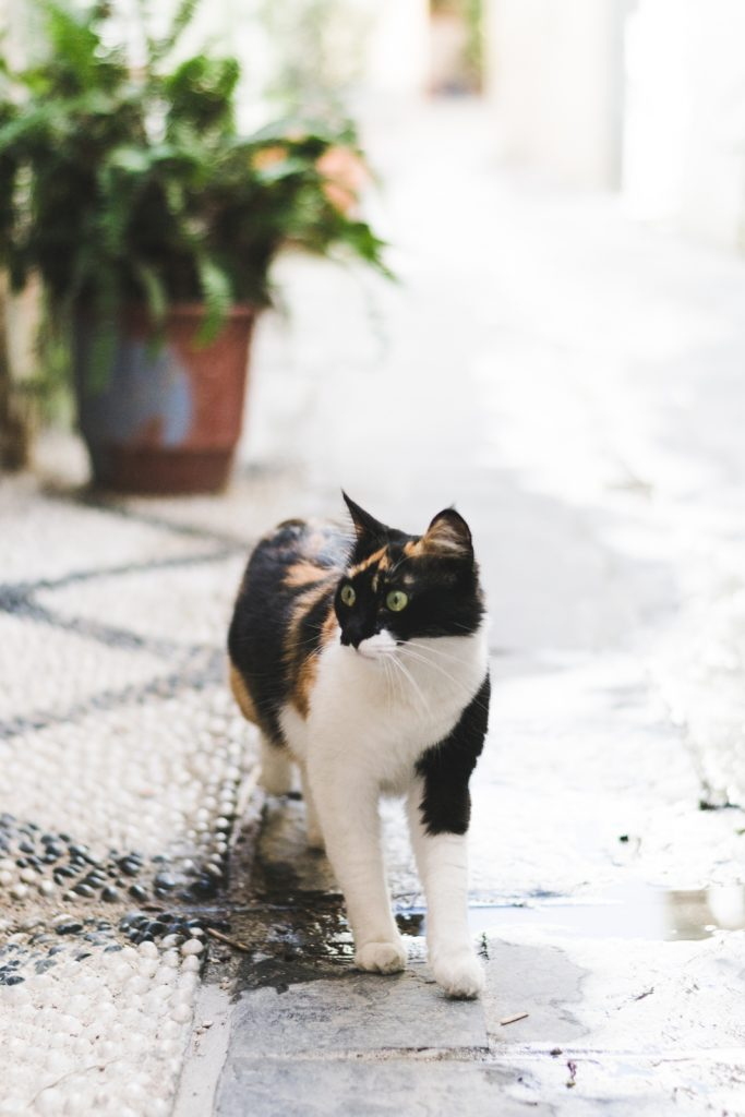 Funny cat in Rhodes Town, Greece - from travel blog: http://Epepa.eu