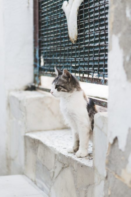 A cat in Rhodes Town, Greece - from travel blog: https://epepa.eu/