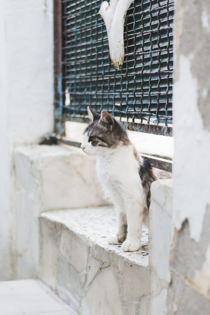A cat in Rhodes Town, Greece - from travel blog: http://Epepa.eu