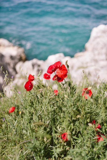 Red poppies on Šetalište braće Gnot, Rovinj, Croatia - from travel blog https://epepa.eu