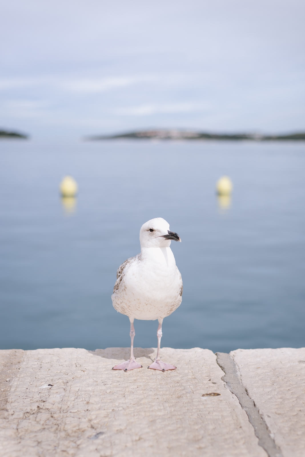 Seagull in the port of Rovinj, Istria - from travel blog http://Epepa.eu