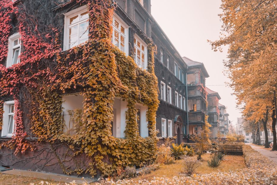 The ivy-covered tenement located at Joachima Lelewela 6, Gliwice, Poland