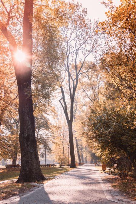 Autumn in Chopin Park (Park Chopina), Gliwice, Poland