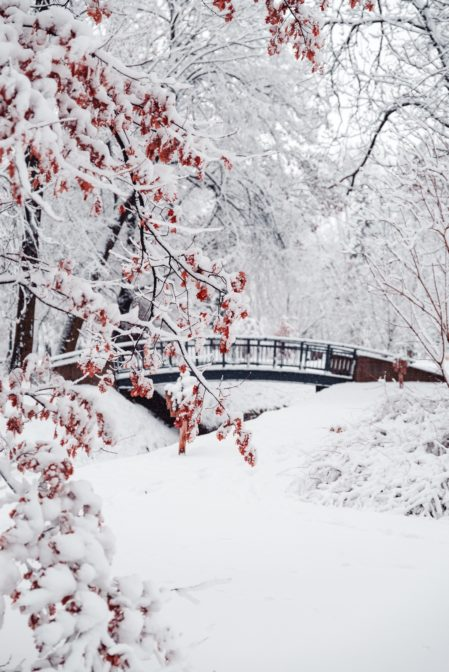Winter in Park Chrobrego (Chrobry Park), Gliwice, Poland