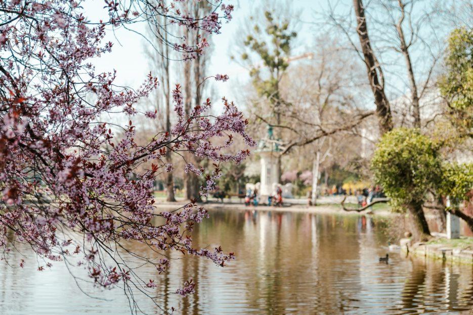 Springtime in Stadtpark, Vienna