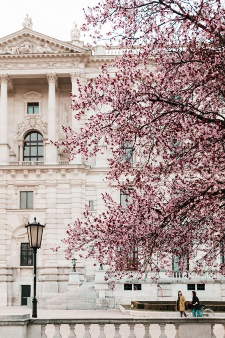 Cherry blossoms and Hofburg Palace, Burggarten, Vienna
