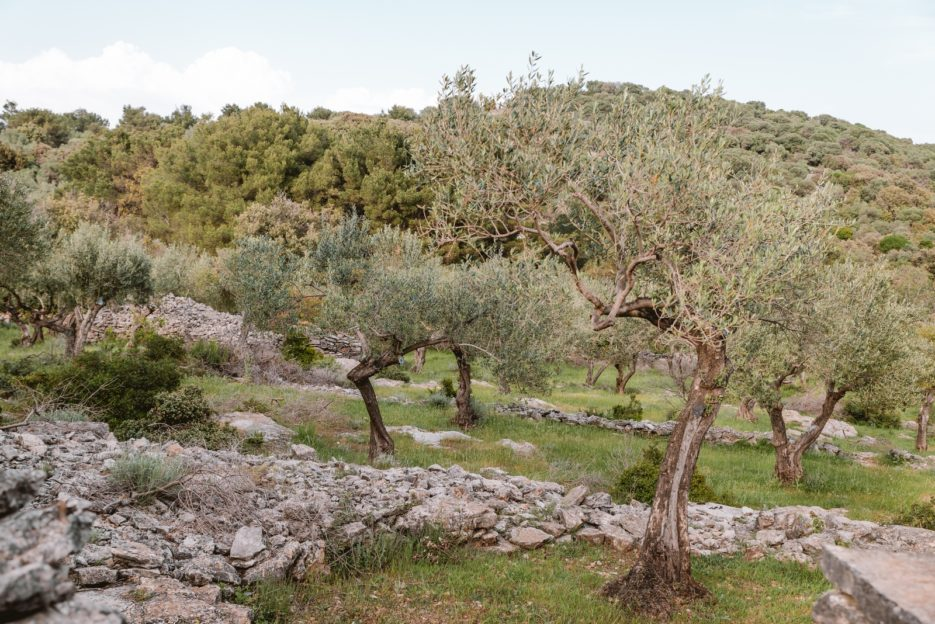 A hike through the olive trees in the upper village of Veli Lošinj, Croatia