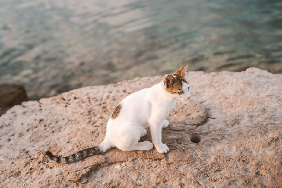 A cute kitty who followed me in Sreser, Croatia