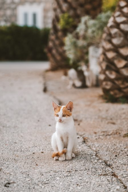 A funny kitty in Sreser, Croatia