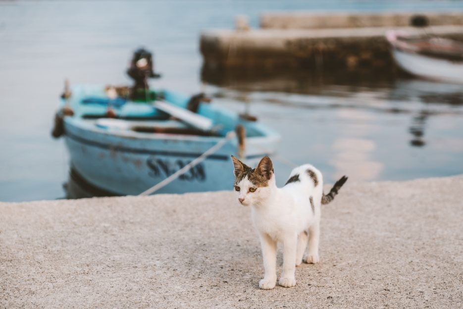 Cat in the fishing village of Sreser, Pelješac Peninsula, Croatia