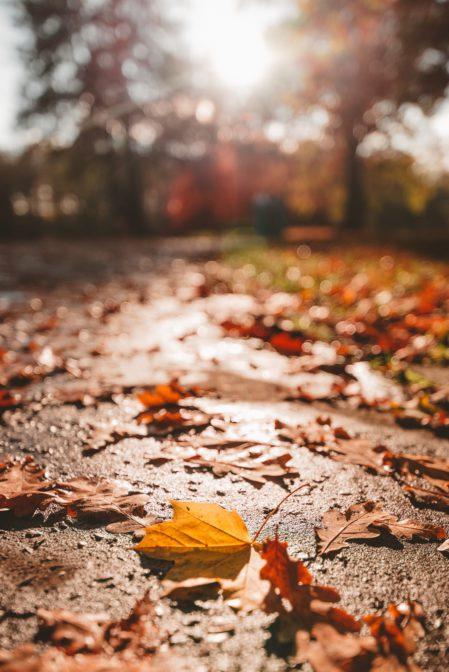 Autumn leaves in Świerklaniec Park, Poland