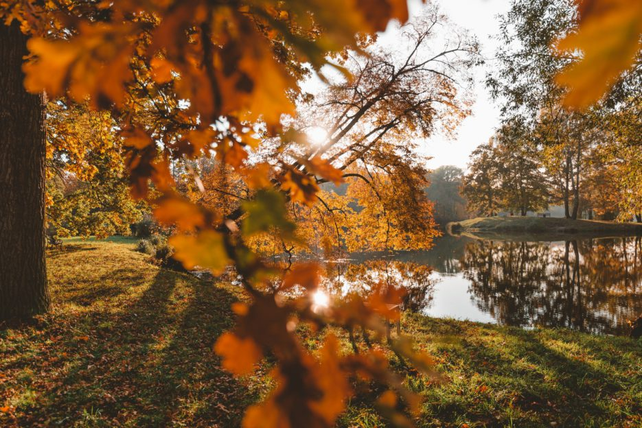 A lovely golden Polish autumn in Świerklaniec Park, Upper Silesia