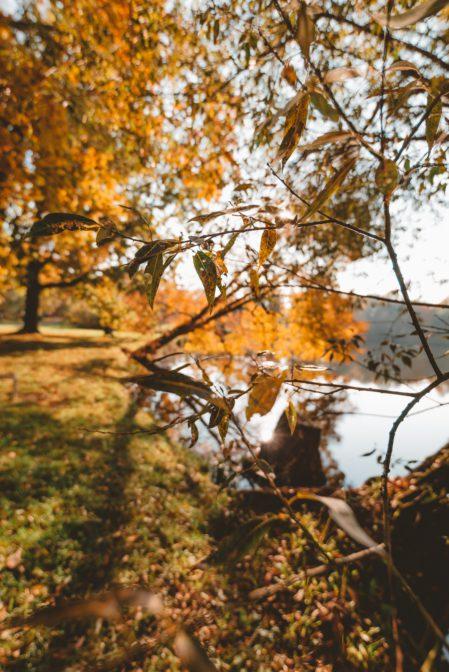 Autumn colors in Świerklaniec Park, Poland