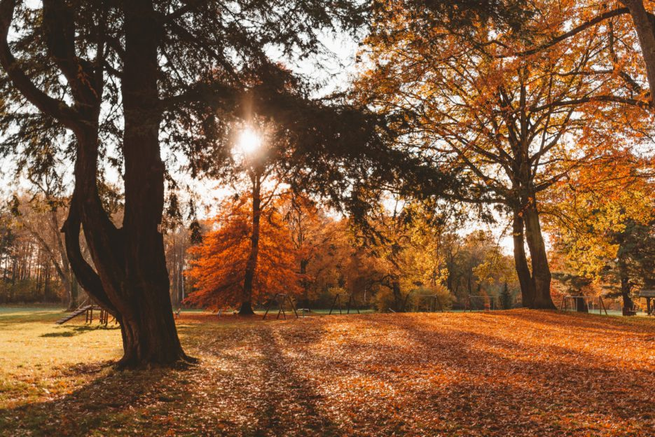 Autumn in Świerklaniec Park, the most beautiful park in Silesia, Poland
